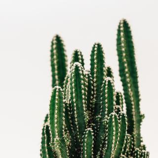 Well-meant, having a cactus moment?